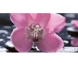 Болеро Декор Орхидея цв.чер 50*25 10-04-04-162-1