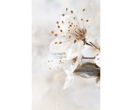 Sakura декор-1 25*40