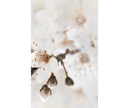 Sakura декор-2 25*40