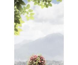 Troyanda Sorrento декор-1  25*33