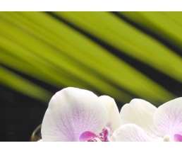 Азалия Орхидея панно часть 1  25*35