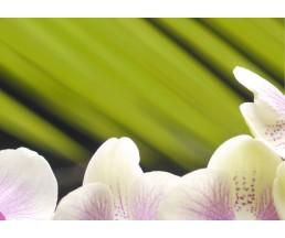 Азалия Орхидея панно часть 2  25*35