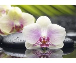 Азалия Декор 1 орхидея  25*35